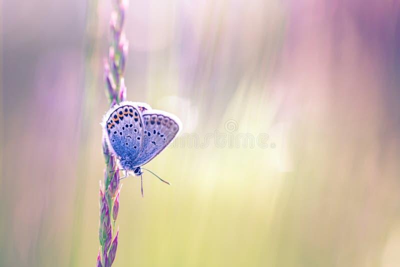 Natury tło z motylim i pięknym wiosny lata łąki tłem Inspiracyjna natura Spokojny natury zbliżenie fotografia stock