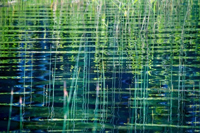 Natury tło z nabrzeżną płochą i swój falisty odbicie w w obraz stock