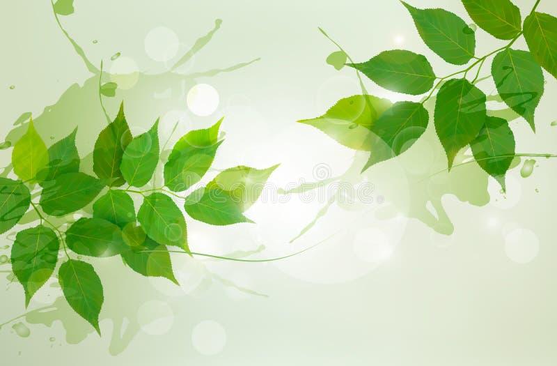 Natury tło z zielonymi wiosna liśćmi ilustracja wektor