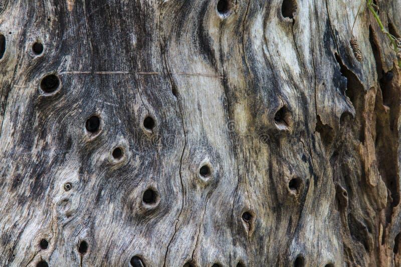 Natury tekstury drewniany tło zdjęcie royalty free