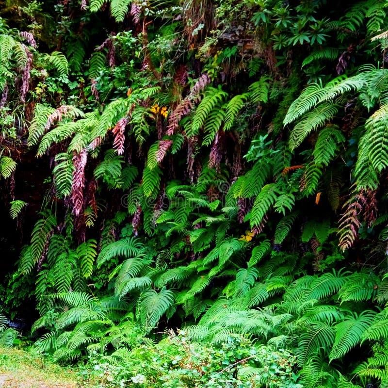 Natury trawy piękne flory obraz royalty free