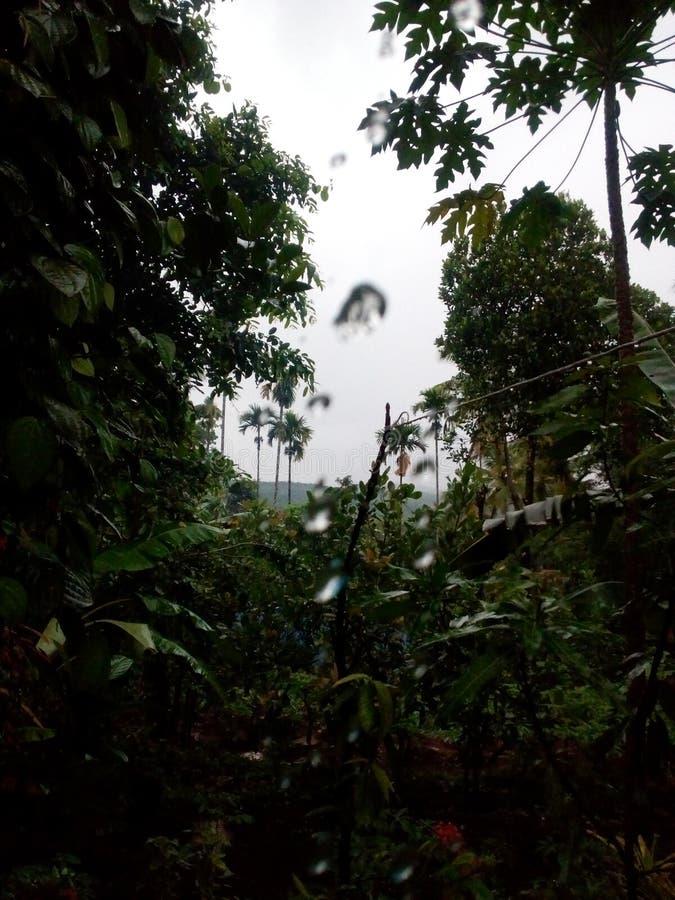 Natury waterfilled pora deszczowa drzewo rośliien natura przegląda nostalgii czuciowego photoframe obraz stock