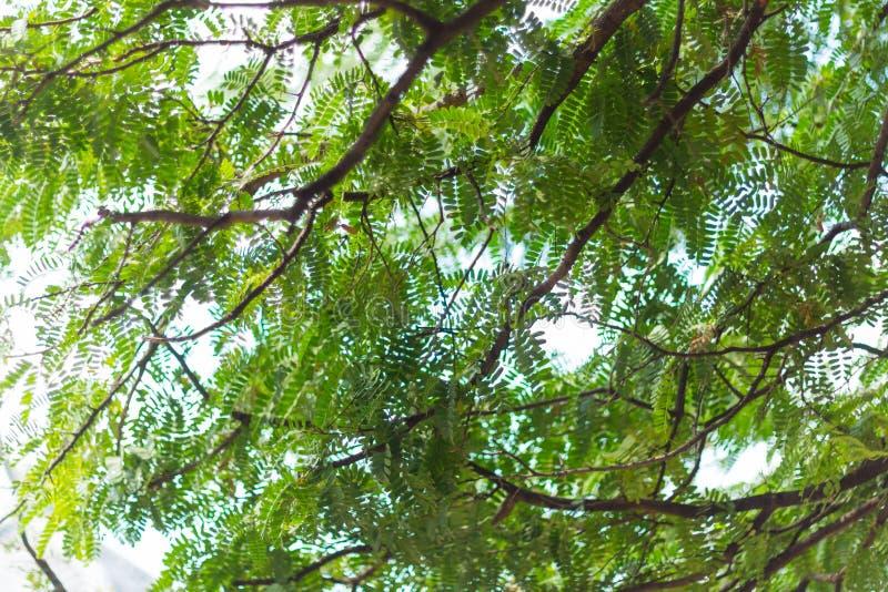 Natury zielony bokeh i plama liścia gałąź obrazy royalty free