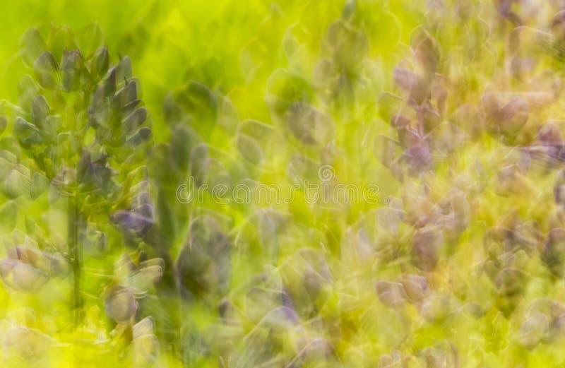 Naturzusammenfassungsmehrfachbelichtung von lupine Blumen in Vernon, Connecticut lizenzfreie stockfotografie