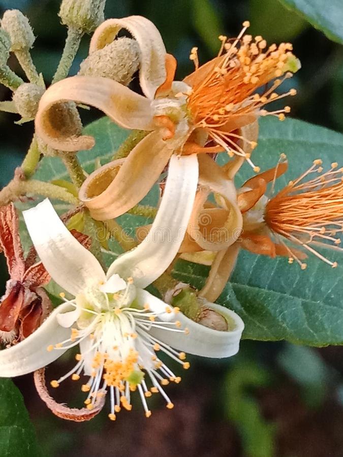 This is Natutral beautiful multi colour wild attractive flower real image of Sri Lanka royalty free stock image