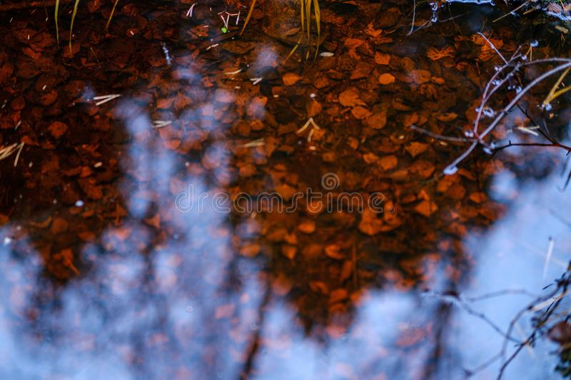 natuur abstract in herfst met oude bladeren in water stock foto