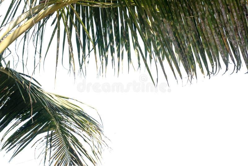 Natuur boomblad met geïsoleerde kopieerruimte stock afbeelding