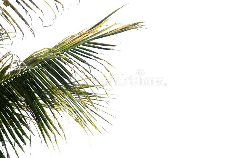Natuur boomblad met geïsoleerde kopieerruimte stock fotografie