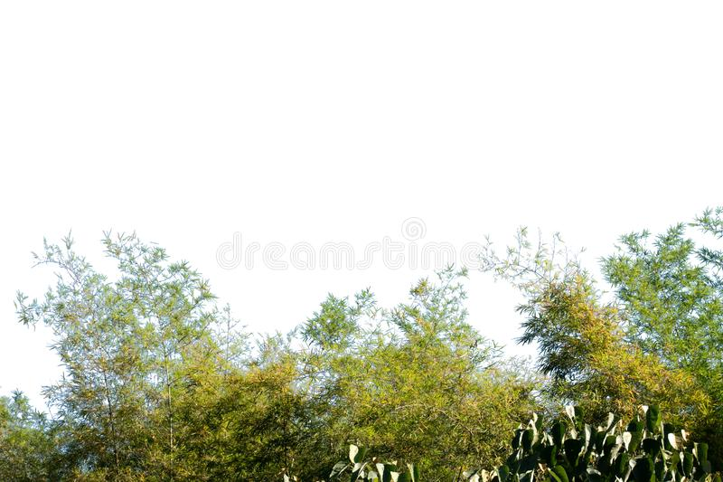 Natuur boomblad met geïsoleerde kopieerruimte stock afbeeldingen