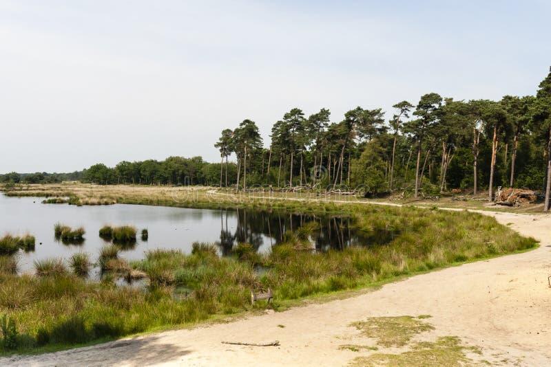 Natuurgebied de Kampina, área da natureza o Kampina imagem de stock