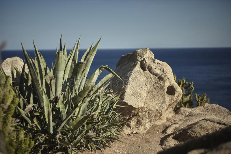 Natuurlijk aloë Vera dichtbij de rotsen stock fotografie