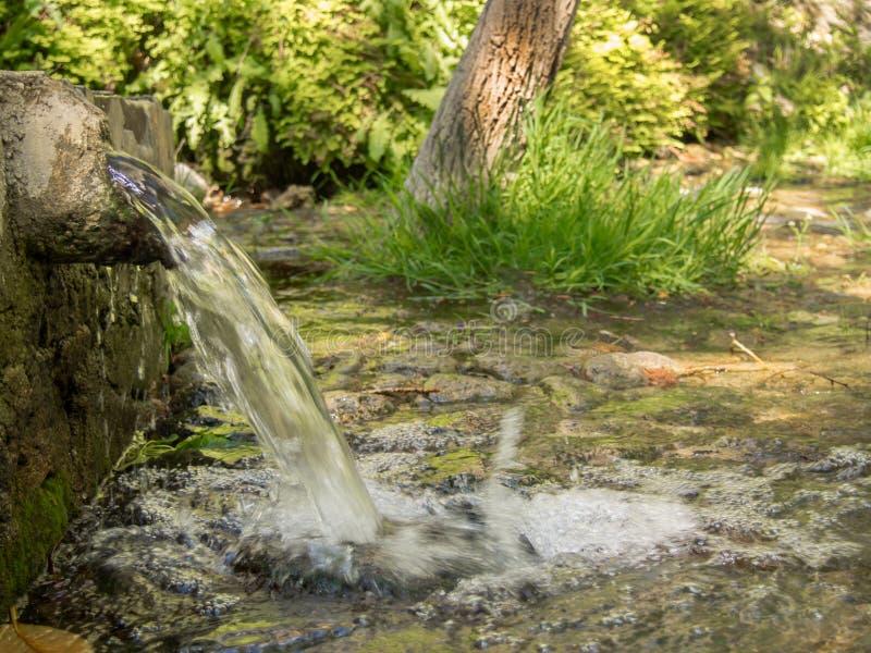 Natuurlijk bronwater bij bos stock afbeelding