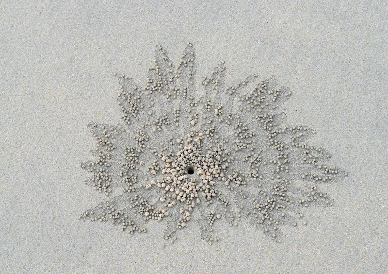Natuurlijk die Patroon van Zandkorrels door de Krab van de Zandwasfles op Sandy Beach worden gecreeerd stock foto