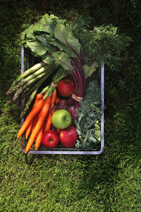 Natuurlijk ecologisch voedsel Groenten rechtstreeks van de tuin royalty-vrije stock foto's