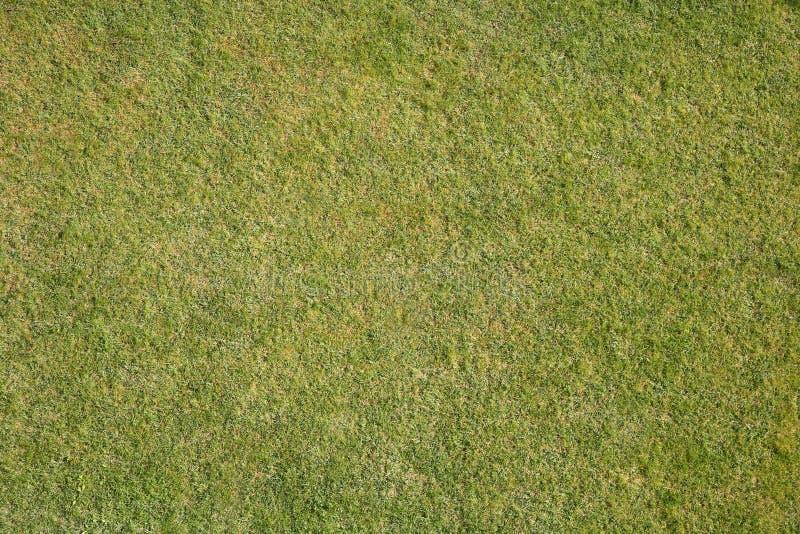 Natuurlijk gras stock foto's