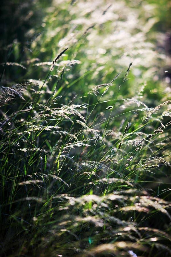 Natuurlijk gras royalty-vrije stock afbeelding