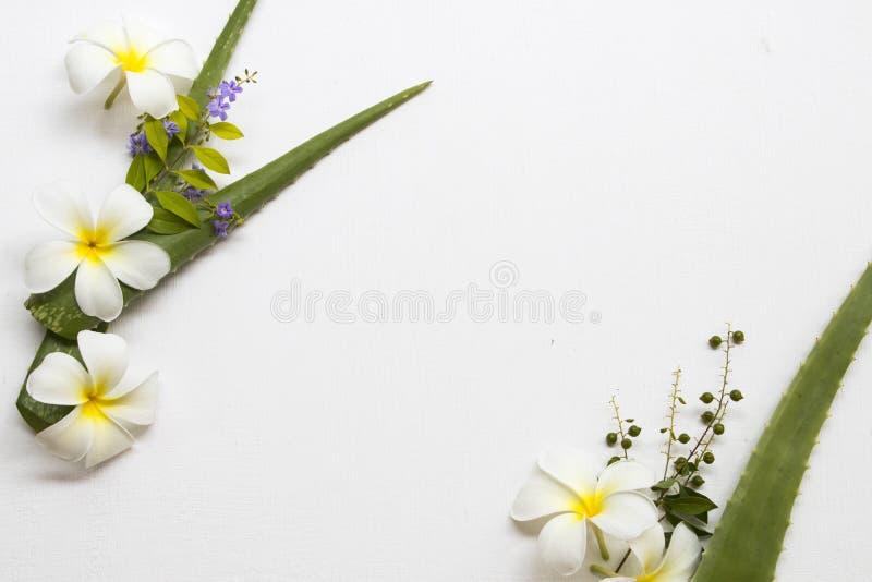 Natuurlijk kruidenaloë Vera met de lokale flora van bloemenfrangipani van Azië stock fotografie