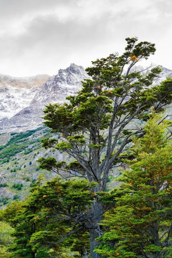 Natuurlijk landschap bij Torres del Paine National Park in Zuidelijk Chileens Patagonië royalty-vrije stock fotografie