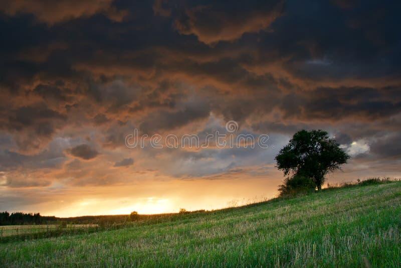 Natuurlijk landschap met het onweer, de donkere hemel en de eenzame boom royalty-vrije stock foto