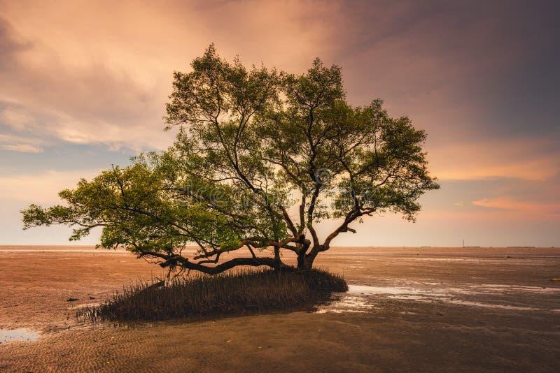 Natuurlijk Landschap van Eenzame Boom in de Overzeese Kust bij Zonsondergang, Aardlandschap van Zeegezicht, Horizon en het Strand stock afbeelding