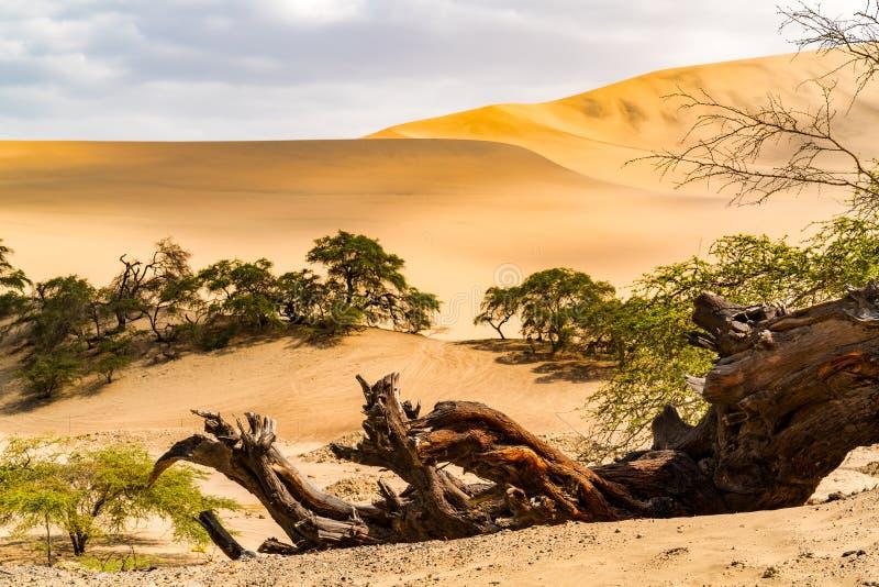 Natuurlijk landschap van Peruviaanse woestijn op de manier aan Nazca stock afbeeldingen