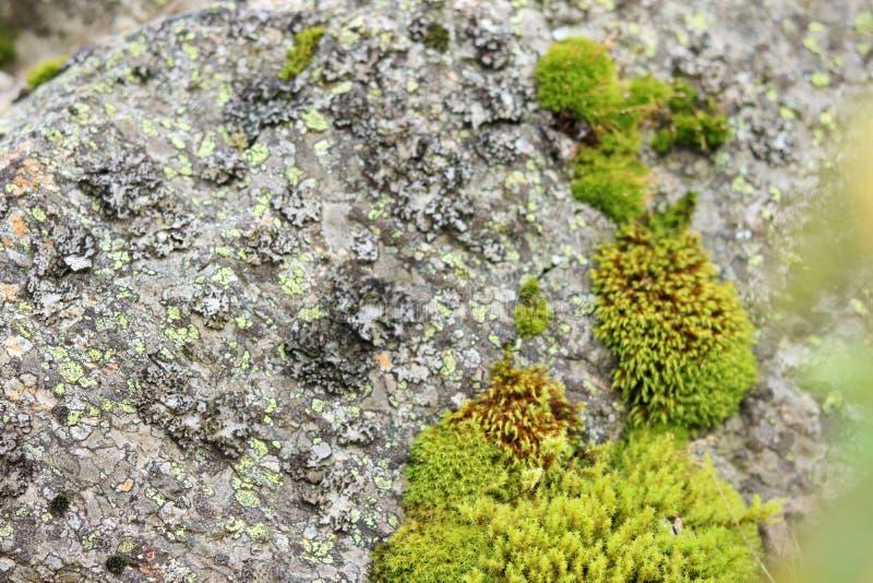 Natuurlijk mos op stenen Textuur in aard abstracte achtergrond stock foto's