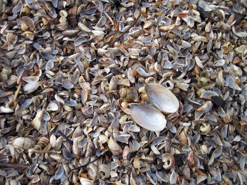 Natuurlijk shells patroon stock afbeelding