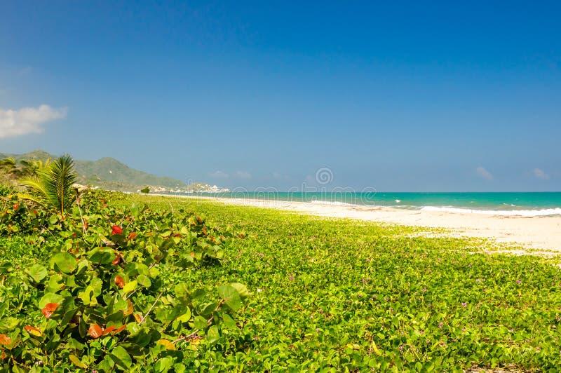 Natuurlijk strand van Arrecifes in nationaal park Tayrona in Colombia royalty-vrije stock foto