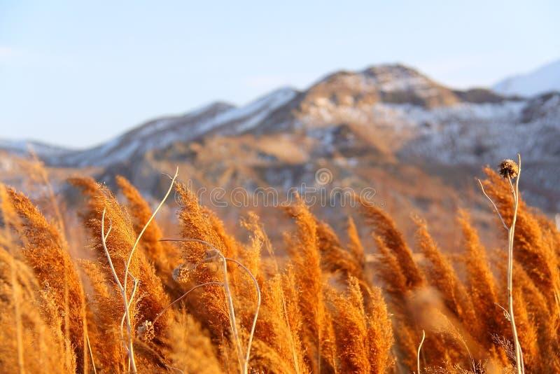 Natuurlijk van Salt Lake City stock foto