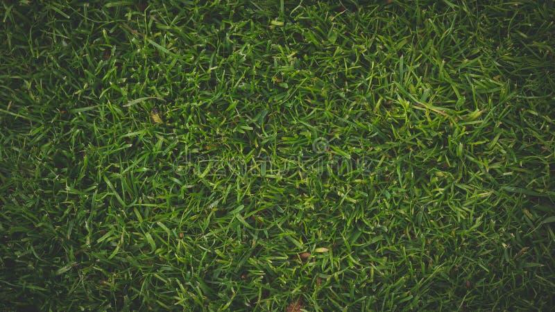 Natuurlijk Vers Groen Graslandschap stock afbeeldingen