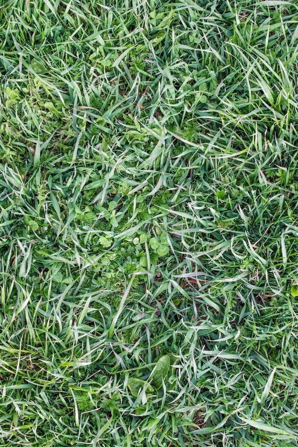 Natuurlijk wild gemengd gras in de weide Achtergrond verticaal stock fotografie