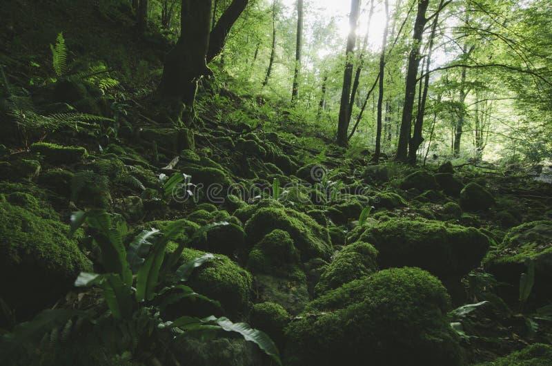 Natuurlijk wild groen bos met mos royalty-vrije stock afbeeldingen