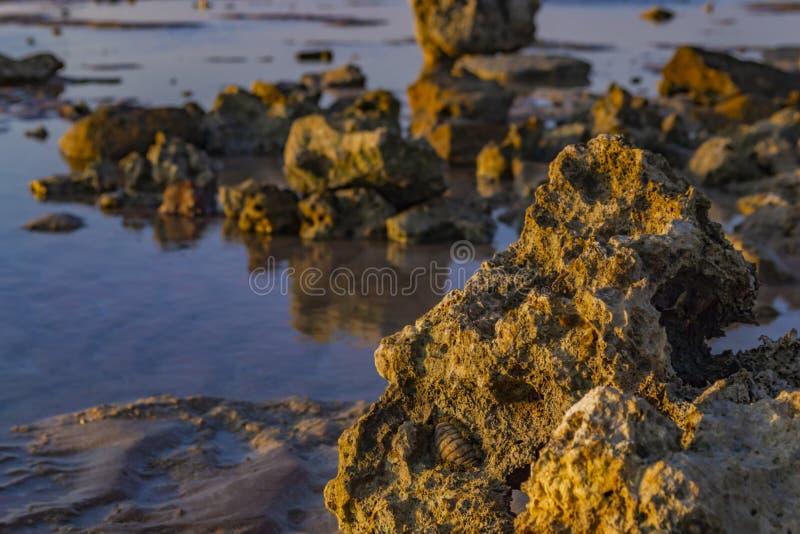 Natuurlijk zeegezicht Koraalriffen in Sharm-el-Sheikh, Egypte stock afbeelding