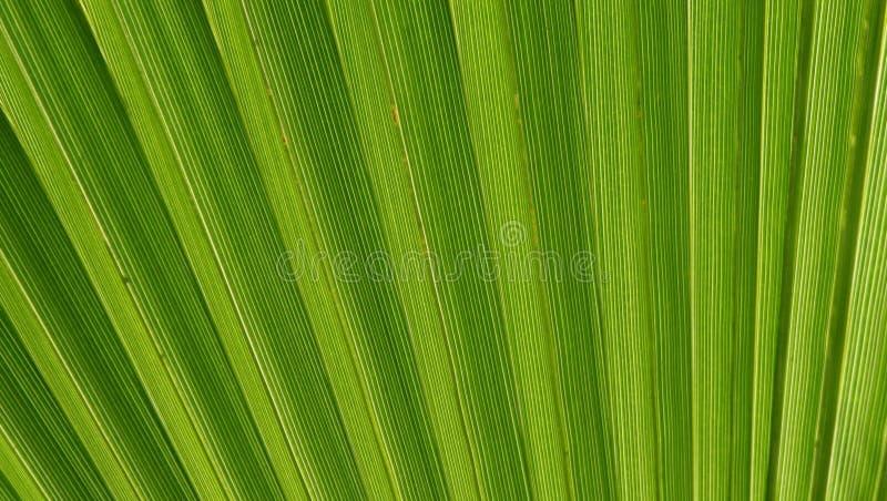 Natuurlijke achtergrond stock afbeeldingen