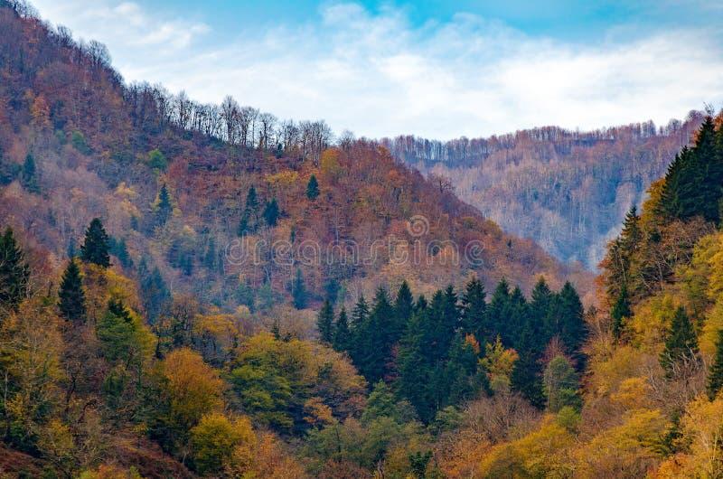 Natuurlijke achtergrond - de herfstbos met gele bomen in heuvels stock fotografie