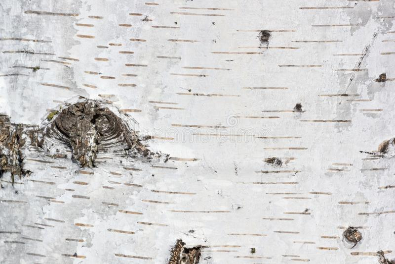 Natuurlijke achtergrond - de horizontale textuur van een echt berkeschorsclose-up stock afbeeldingen