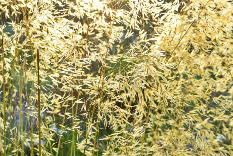 Natuurlijke achtergrond die van Licht door het gras overgaan Etherisch concept royalty-vrije stock fotografie