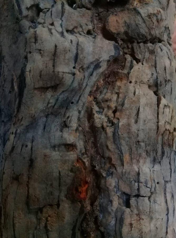 Natuurlijke achtergrond Een boomstam van cork boom stock foto