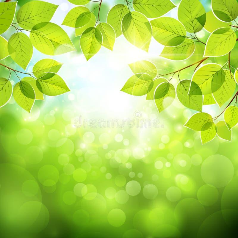 Natuurlijke achtergrond met bladeren royalty-vrije illustratie