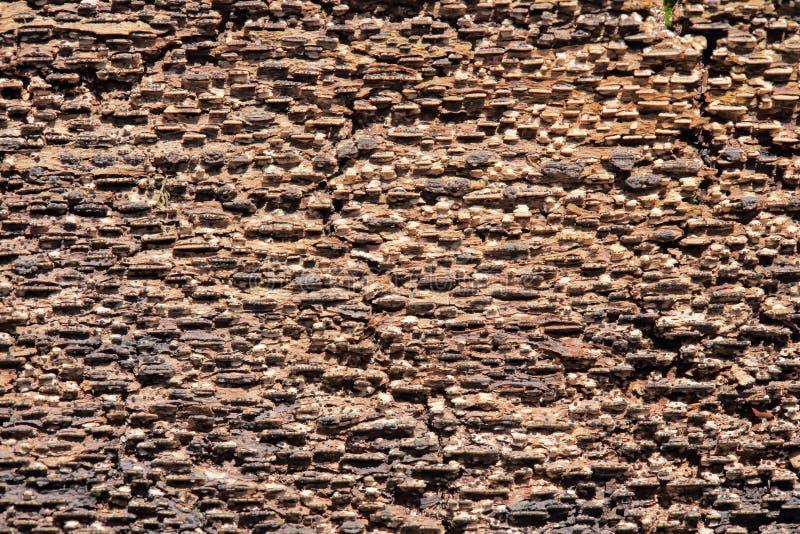 Natuurlijke achtergrond van de schors stock afbeelding