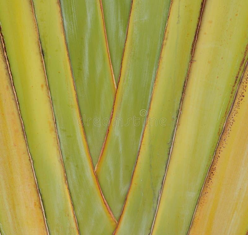 Natuurlijke achtergrond van de stammen van de bladeren van het groene, gele de kleurenclose-up van de banaanpalm stock afbeelding