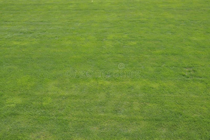 Natuurlijke achtergrond van groen gras van de beroemde Tempel van Hemelpark in Peking royalty-vrije stock afbeelding