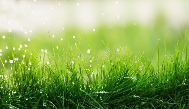 Natuurlijke achtergrond van sappig groen gras en druipende regen op a stock fotografie