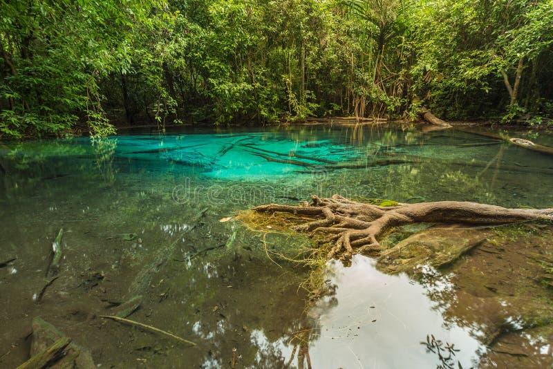 Natuurlijke Blauwe die Lagune in diepe boswildernis wordt gevestigd royalty-vrije stock foto