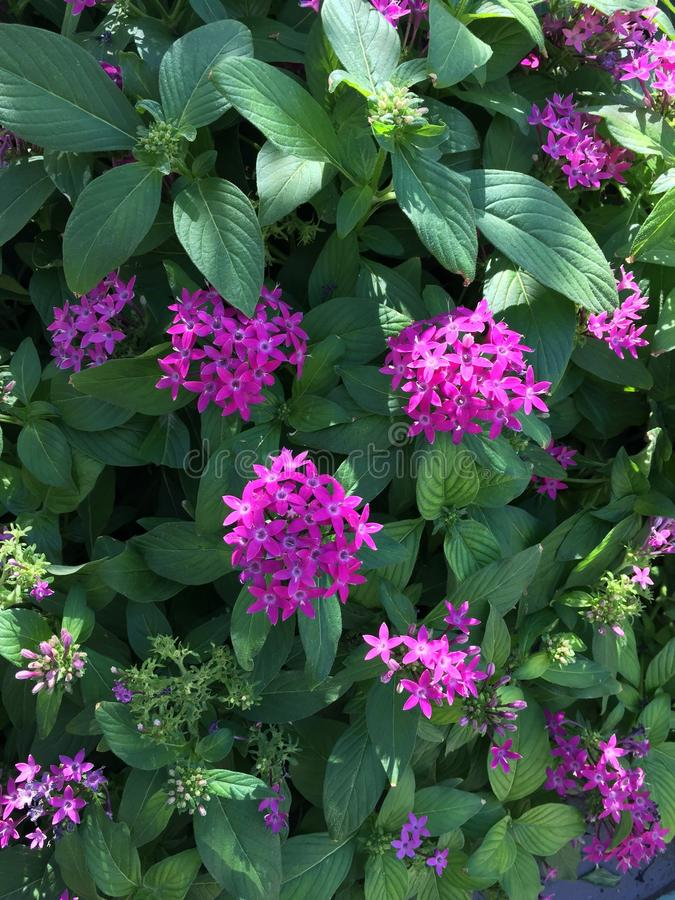 Natuurlijke Bloemboom stock afbeeldingen
