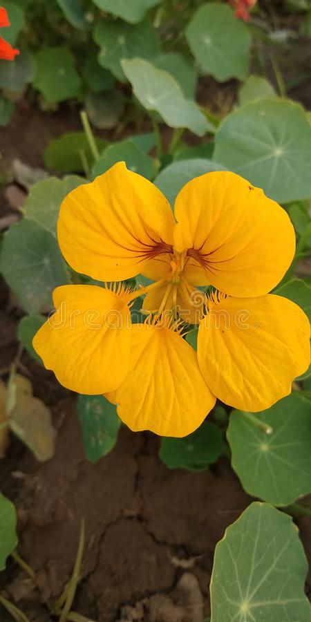 Natuurlijke bloemen royalty-vrije stock foto