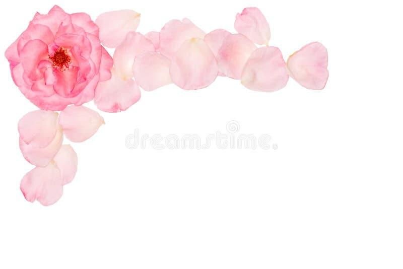 Natuurlijke bloemreeks Mooi bloemenklemart. Elegant bloemenkader, grens, kopbal, hoek Nam roze bloemen toe royalty-vrije stock foto