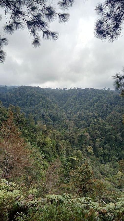 natuurlijke bossen royalty-vrije stock afbeeldingen
