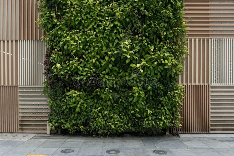 Natuurlijke bruine houten patroontextuur en verticale groene muurachtergrond royalty-vrije stock foto's