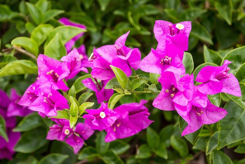 Natuurlijke cllorbinnenplaats van Fiowerorchideeën royalty-vrije stock fotografie